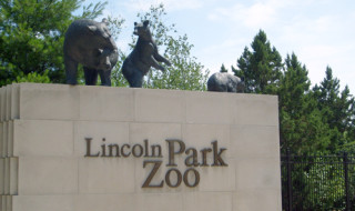 LincolnParkZooHead
