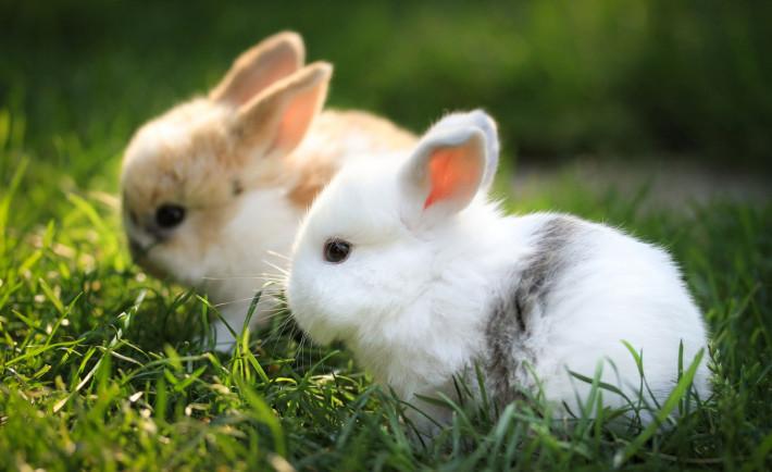 Bunnies north side